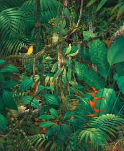 Birds in Jungle