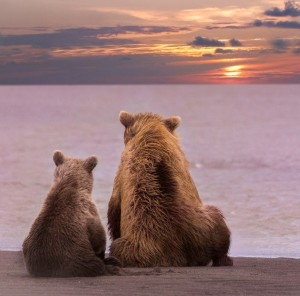 Bears at Sunset